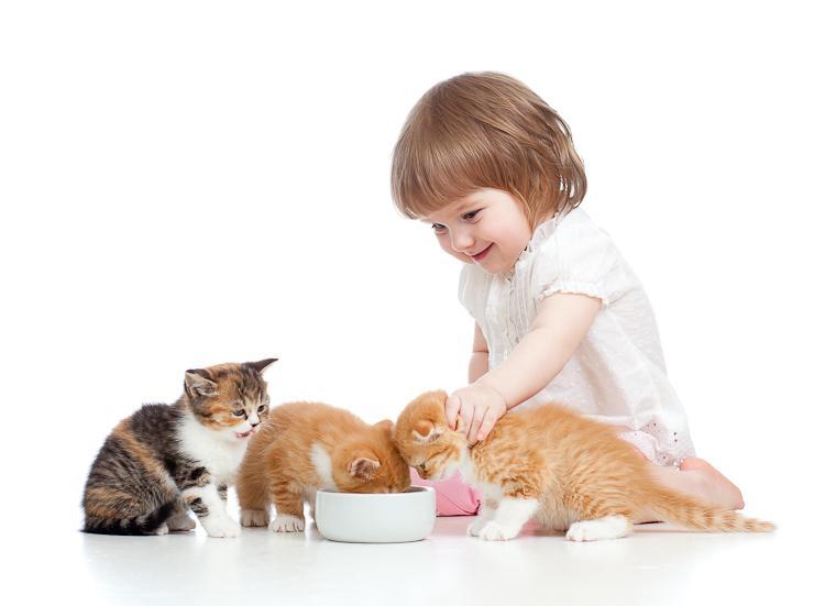 Как выбрать корм для котенка?