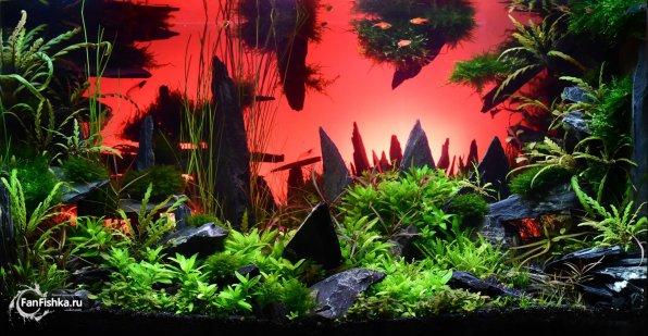 kak vybrat luchshee osveshhenie dlya akvariuma s rasteniyami i vse ob etom